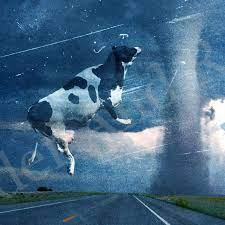 Cow flying around in a tornado.